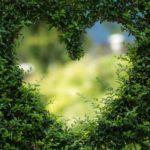 Piękny ,a także zadbany zieleniec to zasługa wielu godzin spędzonych  w jego zaciszu podczas pielegnacji.
